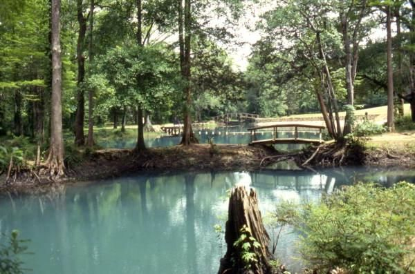 View of the Blue Hole Spring swimming area at Florida ...