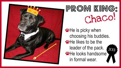 TAGS Awards: Part 1 - Chaco the Prom King!