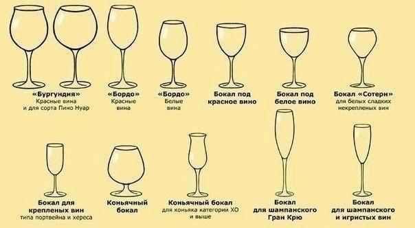 Названия бокалов для вина и их назначение