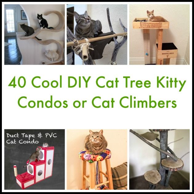 Do you have a cat? If you are a DIY fan, then we bet you're going to be thrilled to know there are lots of projects out there especially for cat lovers. You can make your feline a kitty condo, cat tree, cat scratchers and other types of kitty furniture. One of the best things …
