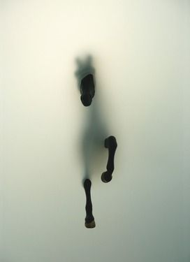 "Saatchi Online Artist Miriam Sweeney; Photography, ""Subversion"" #art"