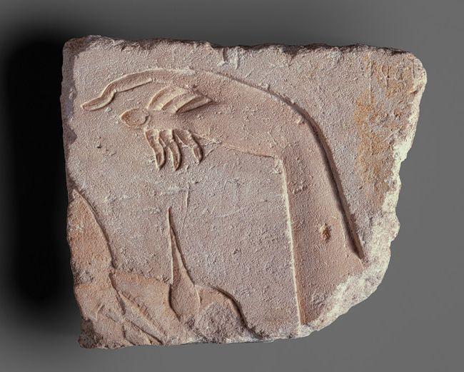 A Royal Hand, New Kingdom, Dynasty 18, reign of Akhenaten, ca. 1349–1336 b.c. | Egyptian | The Metropolitan Museum of Art, New York | Gift of Norbert Schimmel, 1985 (1985.328.1): Royals Hands, Dynasty 18, 18 Reign, 13491336 Bc, Hands Egyptian, Akhenaten, Metropolitan Museums, Amarna Periodic, Egyptian Limestone