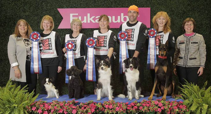The 2019 AKC Obedience Classic and AKC Agility