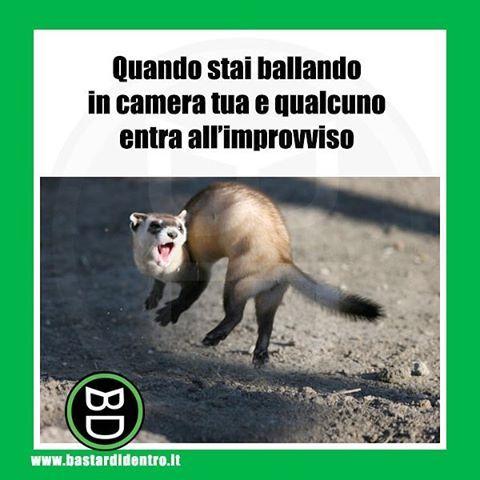 Io #ballo da solo!  Seguici su youtube/bastardidentro #bastardidentro #camera www.bastardidentro.it