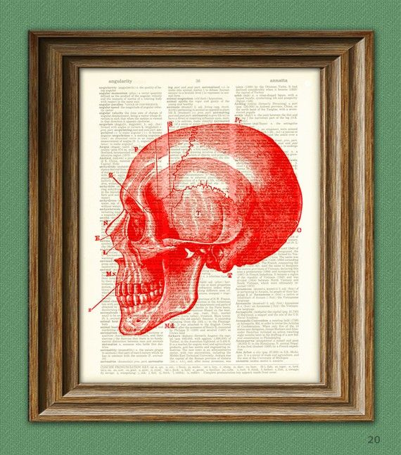 Skull Art Print Diagram of a RED SKULL Side View by collageOrama, $7.99