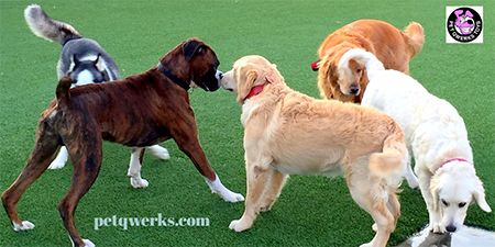 Dog parks can seem like a brilliant idea until you get there and your dog doesn't know how to behave. A single situation can go wrong and lead into an attack or fight, which can cause life-long reactivity or fear aggression in your dog. The bummer reality is that dog parks are not the playground most people think they are. Here are the most common problems dog owners encounter at the dog park.