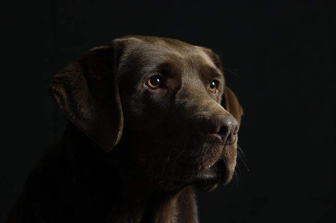 Pet Portraits Photo Contest Finalists! Blog - ViewBug.com