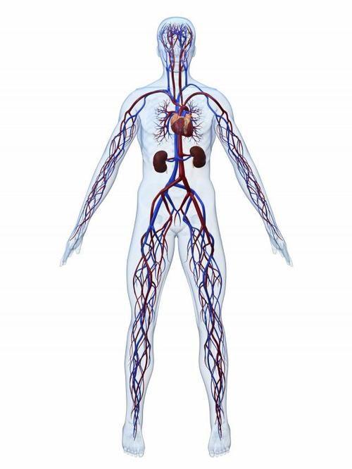 Neidonhiuspuu on erinomainen älylääke eli nootropiini.