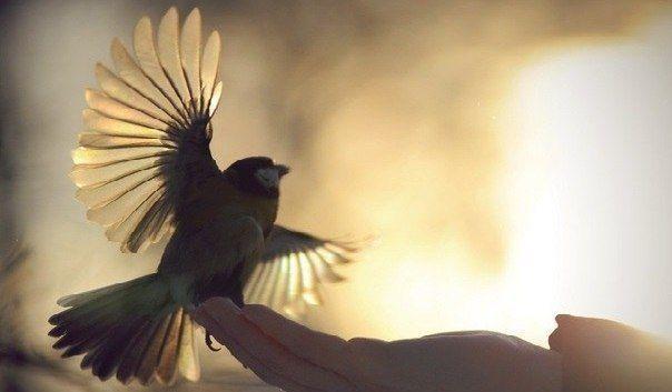 """""""Кто берёт - наполняет ладони, кто отдает - наполняет сердце""""  © Лао Цзы"""