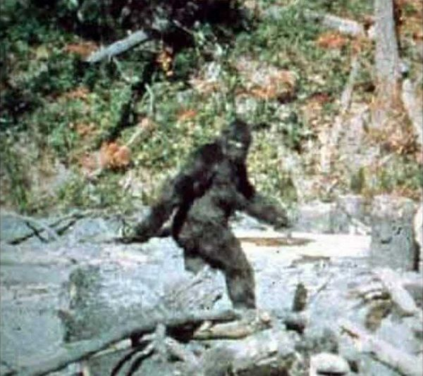 The Patterson-Gimlin Bigfoot footage @freaklore.com