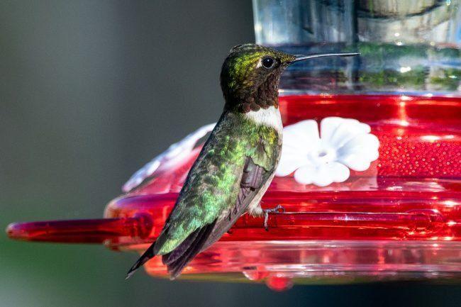 The Best Hummingbird Feeders For Your Garden In 2020 Humming Bird Feeders Glass Hummingbird Feeders How To Attract Hummingbirds