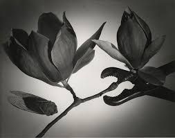 Image result for max dupain's photos