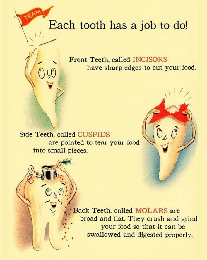Great information! #PediatricDentistAustin