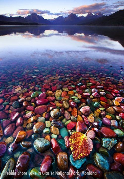 Pebble shore lake in Glacier National park, Montana...I want to go here and pick ALL the rocks!