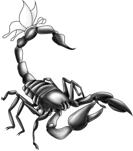 Scorpion Tattoo Designs   The Body is a Canvas