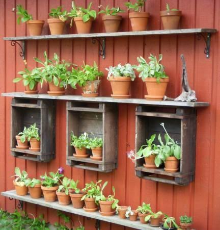 Bilder på blommor & växter | Fotoalbum Aurikel teater - Helena´s Hem o Trädgård - Allt om Trädgård