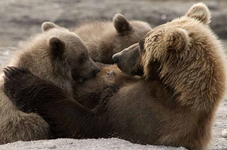 Russia, Kamchatka | by richard.mcmanus.