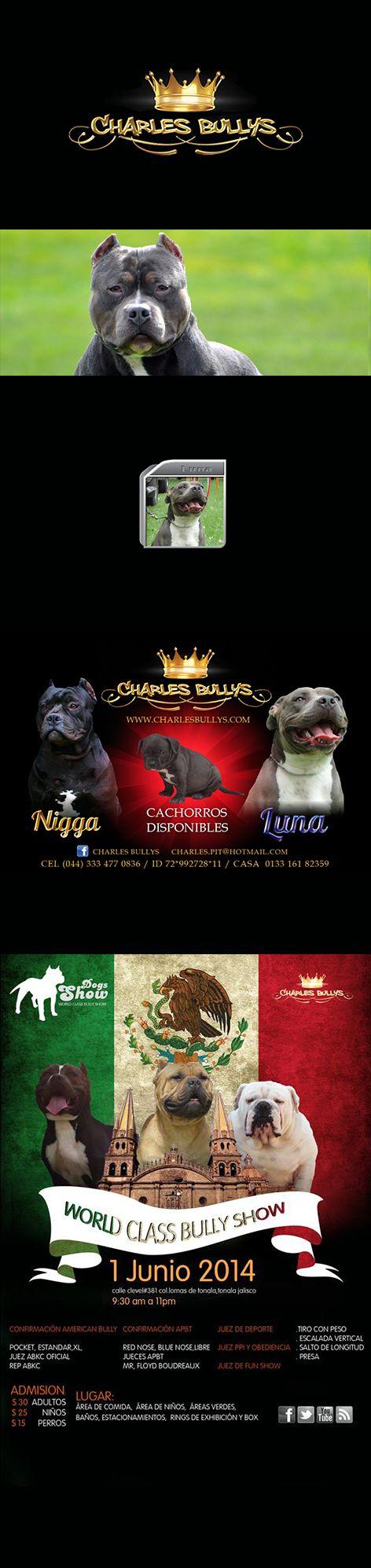Charles Bully   Criador de Perros publicidad banner y botón