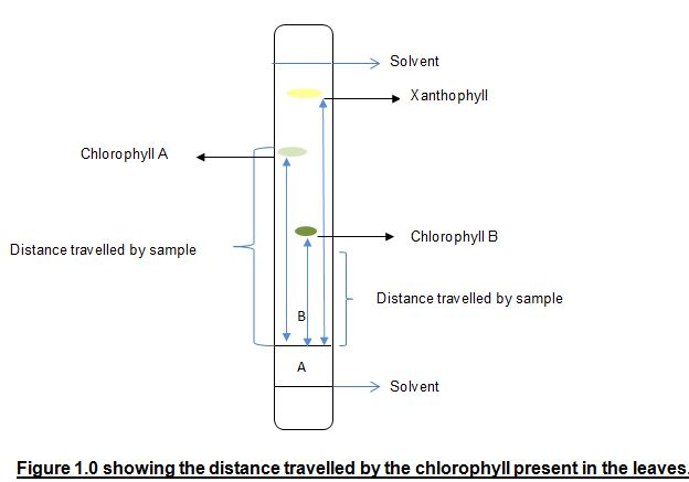 the separation of ink chromatography d An easy-to-understand explanation of how chromatography works, the different types, and what they're used for.
