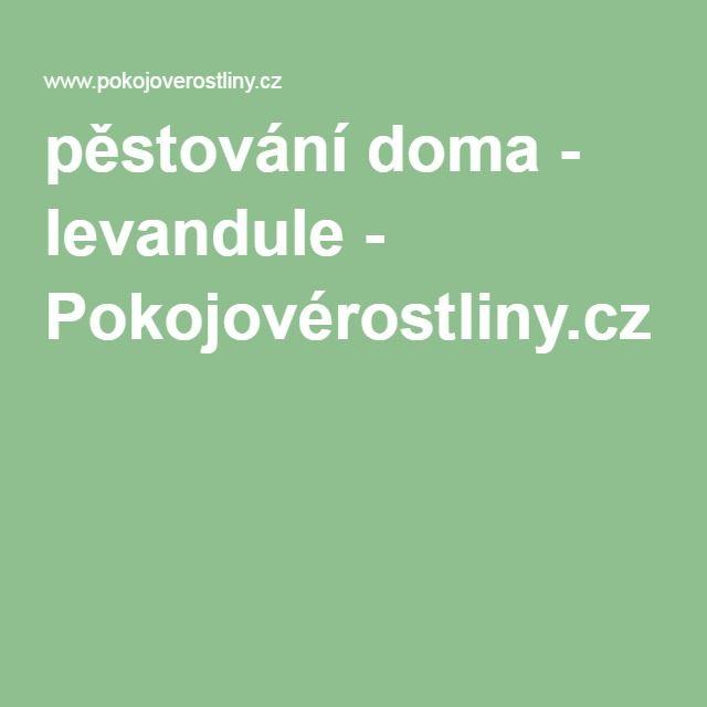 pěstování doma - levandule - Pokojovérostliny.cz