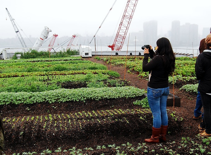 Rooftop Urban Farm: Ohh Lala, Future Farms, Positive Social, Rooftops Gardens, Growing Food, Green Restaurants, Bunnies Rabbit, Social Impact Innovation, Rooftops Urban