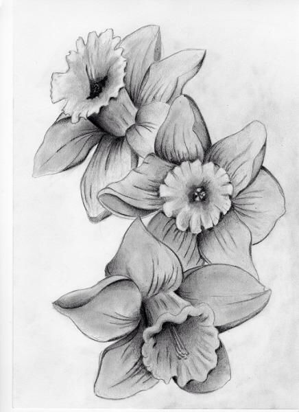 Daffodil | March Birth Flower | Tattoo Ideas - Lilly | May Birth Flower | Tattoo Ideas - flower detail
