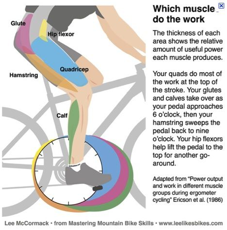 Cycling muscles