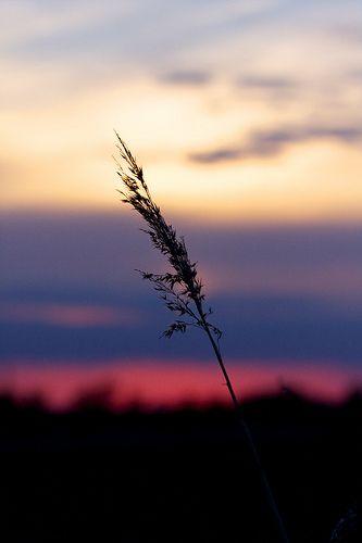 Sunset on the Strawberryline
