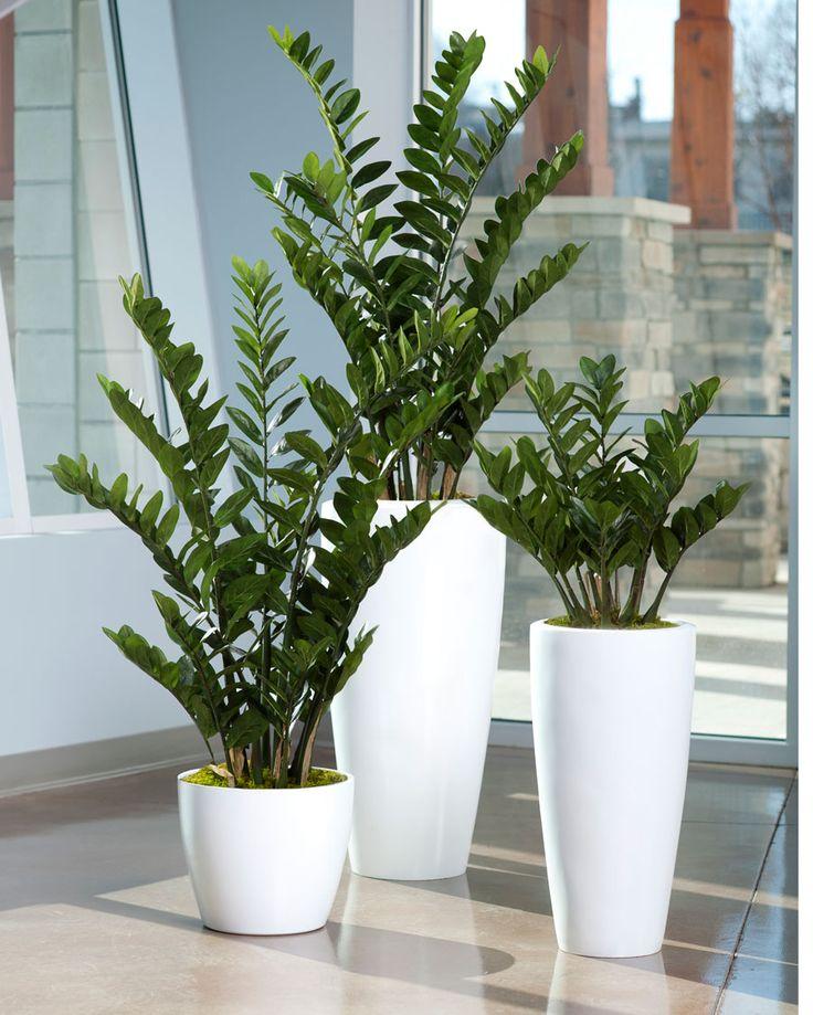 4' ZZ Silk Plant