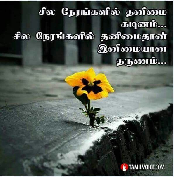 Family Quotes In Tamil: 17 Best Images About Tamil Quotes On Pinterest