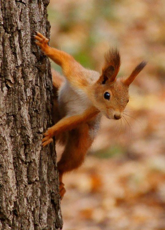 Autumn ~ country, squirrel, bokeh