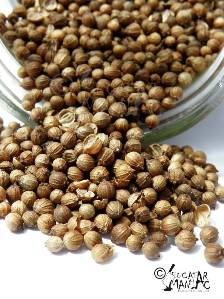 coriander seeds/ seminte de coriandru