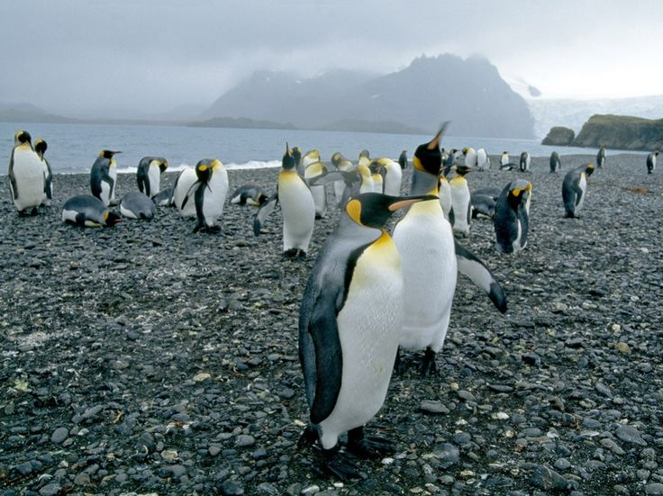 See pictures of emperor penguins, chinstrap penguins, rockhopper penguins, and more in this photo gallery from National Geographic..