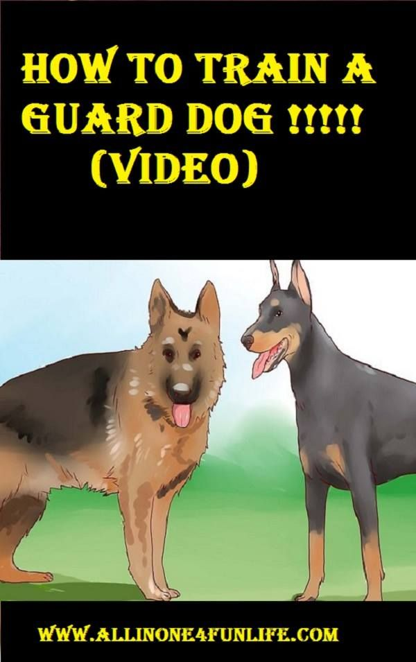 How To Train A Guard Dog Video Dog Dogs Guard Train Animal