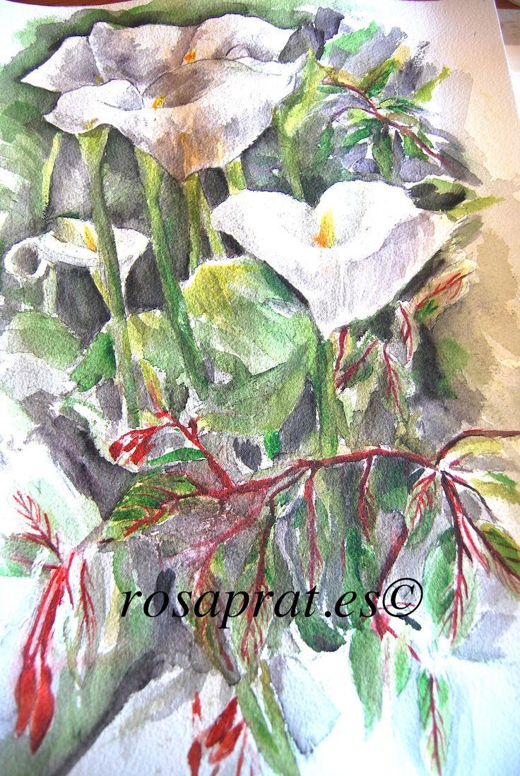 Calas. Acuarela Watercolor .