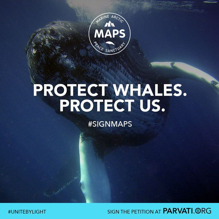 Whales are crucial performers in helping to regulate the planet's temperatures. They bring nitrogen from the ocean's depths to fertilize carbon-capturing phytoplankton at the surface. The Arctic is a key habitat for several different whale species. All of them are put at risk by the threat of exploitation. This is why MAPS: the Marine Arctic Peace Sanctuary, is crucial. It protects this fragile ecosystem, which is key to keeping our planet cool. Please sign the MAPS petition at Parvati.org!