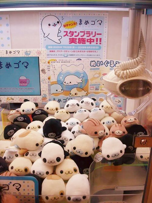 Mamegoma so cute cant just pick one. Kawaii. Cute animal