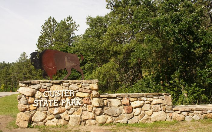 Custer State Park #Buffalo #US #RoadTrip #SouthDakota