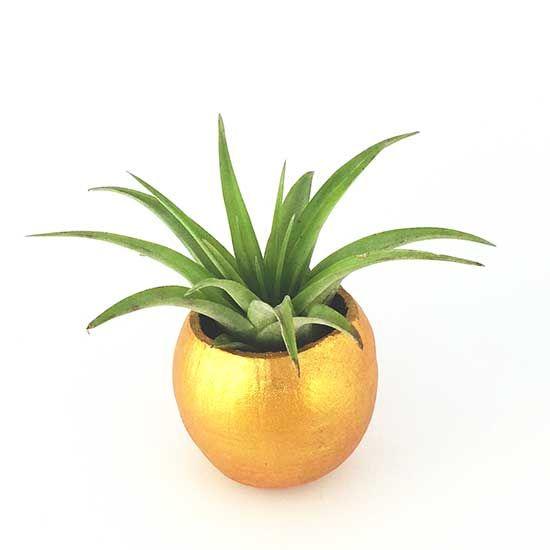 cupa naturla mare aurie plante aeriene