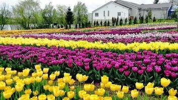 Bulbi de flori de vanzare - Google+