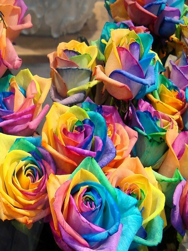 20 best flowers images on pinterest my mom bleeding for Where can i buy rainbow roses