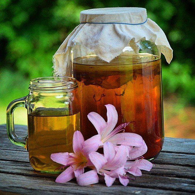 Чайный гриб: все секреты напитка (как вырастить, ухаживать, употреблять). Обсуждение на LiveInternet - Российский Сервис Онлайн-Дневников
