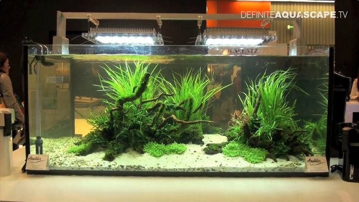 Aquarium ideas from InterZoo 2014 - Sicce