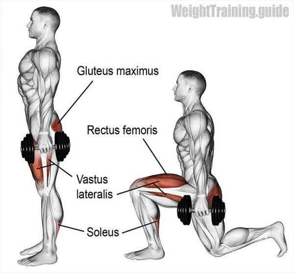 Какие мышцы напрягаются при нагрузках в тренажерном зале