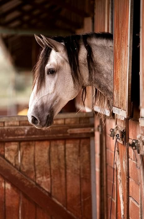 <3: Hors Barns, Ears Mornings, Equine, Hors Stables, Grey Hors, Beauty Hors, Barns Doors, Country Life, Horses Love