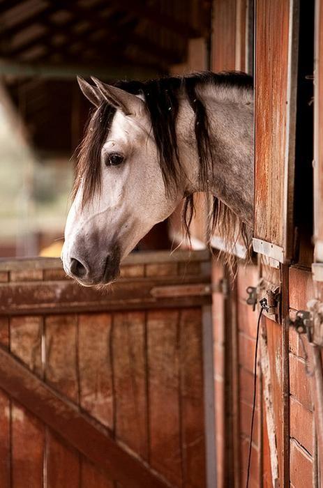 Love Barns! And horses!