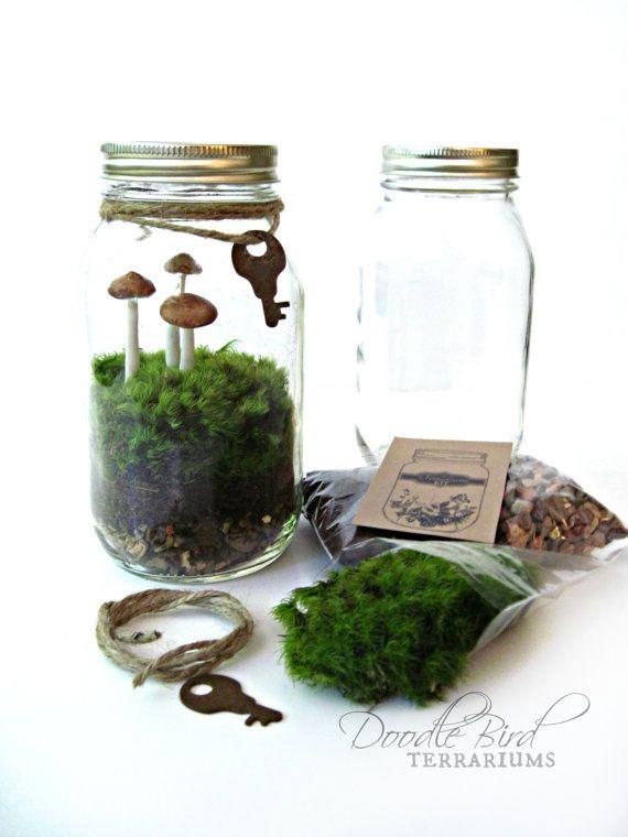 Terrarium Kit Mason Jar Kit Plants Terrarium By Doodlebirdie