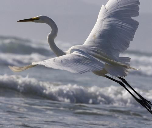 A free bird leaps on the back of the wind and floats downstream till the current ends and dips his wing in the orange suns rays and dares to claim the sky.