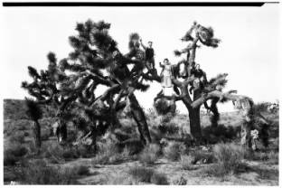 Three people sitting in Joshua Trees in the desert, [s.d.] :: California Historical Society Collection, 1860-1960