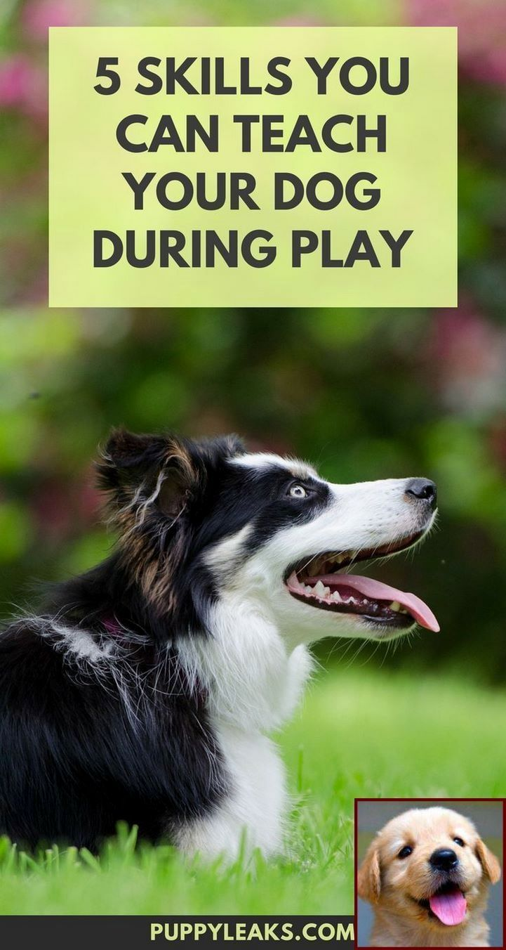 1 Have Dog Behavior Problems Learn About Potty Training Puppy To Ring Bell And Clicker Training Your Dog To With Images Dog Behavior Training Dog Training Puppy Training